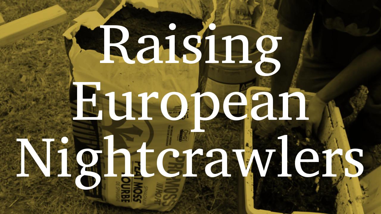 Raising European Nightcrawlers