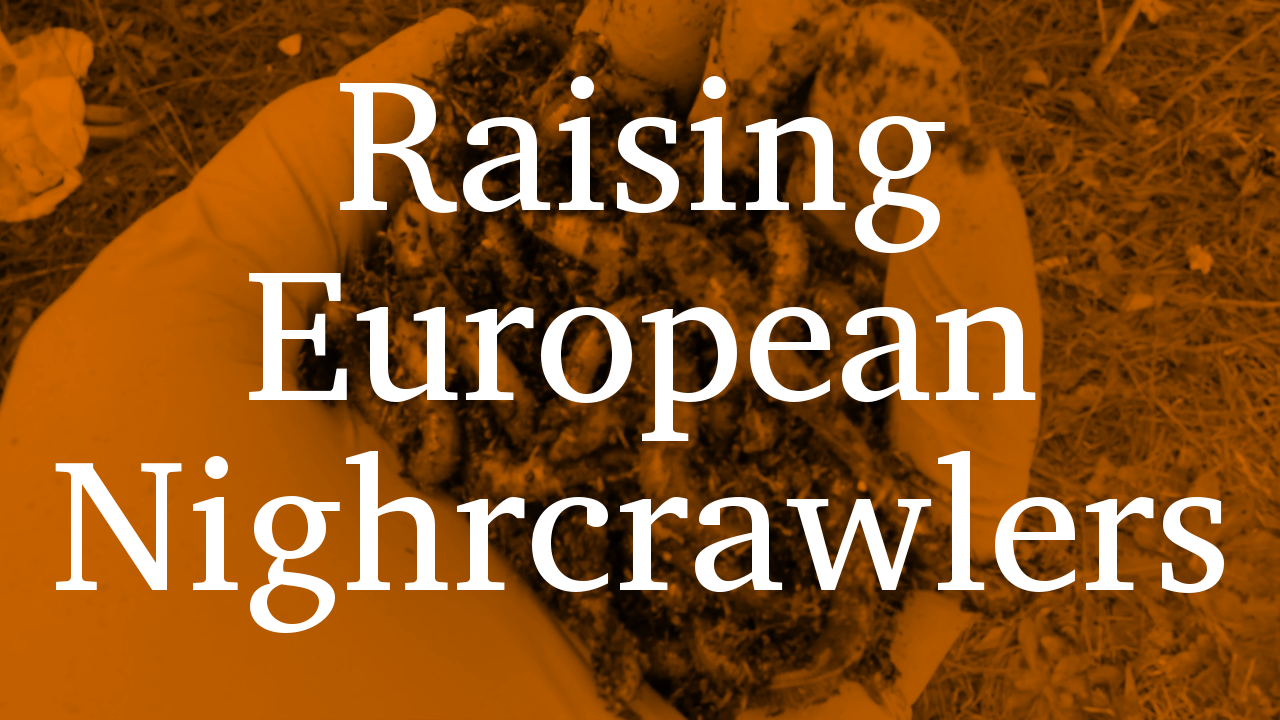 Raising European NightcrawlersII